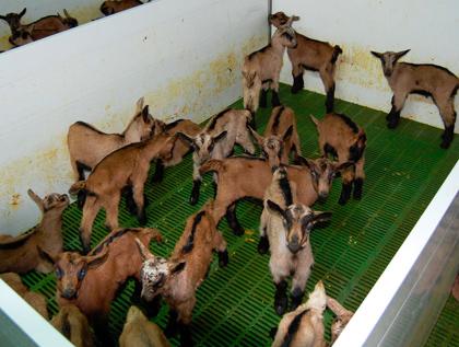 granja modular corderos engorde polyarmados lleida